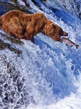 Grizly Bears at Katmai National Park, Alaska, USA by Gleb Tarro