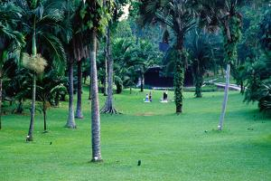 A Section of Lawn in the 54 Hectare Singapore Botanic Gardens, Singapore, South-East Asia by Glenn Beanland