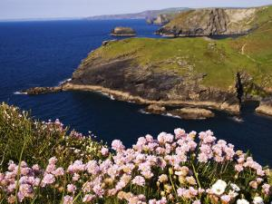 Wildflowers on Rugged Cliffs, Tintagel, Cornwall, England by Glenn Beanland