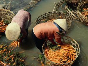 Women Washing Carrots in River Water Da Lat, Lam Dong, Vietnam by Glenn Beanland