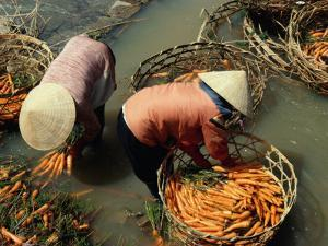 Women Washing Carrots in River Water Da Lat, Lam Dong, Vietnam by Glenn Beanland