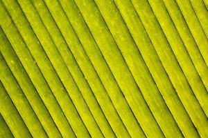 Close-Up of a Green Leaf in a Botanical Garden, Hawaii Tropical Botanical Garden, Hilo, Big Island, by Glowimages