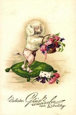Glückwunsch Geburtstag, Pudel, Blumenkorb, Kissen, Brief