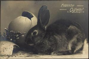 Glückwunsch Ostern, Hase, Offenes Ei, Weidenkätzchen