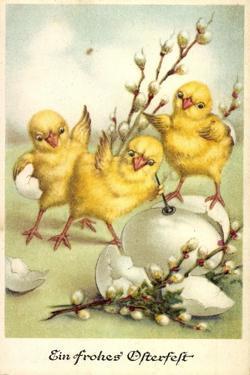 Glückwunsch Ostern, Küken Mit Weidenkätzchen