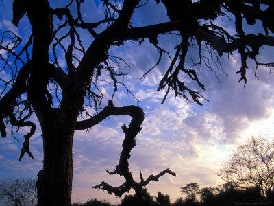 https://imgc.allpostersimages.com/img/posters/gnarled-tree-silhouetted-by-sunrise-near-a-mursi-village-omo-river-region-ethiopia_u-L-P584Z80.jpg?artPerspective=n