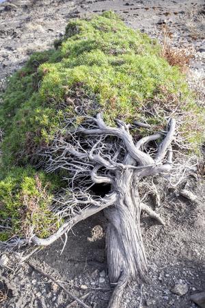 https://imgc.allpostersimages.com/img/posters/gnarled-vegetation-in-cap-de-creus-costa-brava-catalonia-spain_u-L-Q1EXXJM0.jpg?artPerspective=n