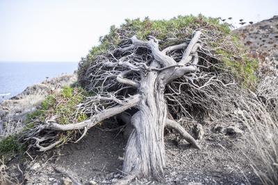 https://imgc.allpostersimages.com/img/posters/gnarled-vegetation-in-cap-de-creus-costa-brava-catalonia-spain_u-L-Q1EXYWP0.jpg?artPerspective=n