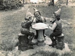 Gnomes Sitting around a Mushroom