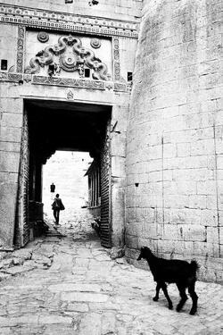 Goat and Man, Fort Entrance Gate, Jaisalmer, Rajasthan, India, 1984