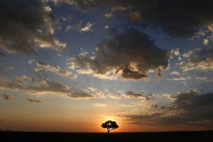 Acacia tree and clouds at sunset, Masai Mara National Park, Kenya by Godong