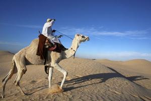 Dromedary rider in the Sahara, Douz, Kebili, Tunisia by Godong