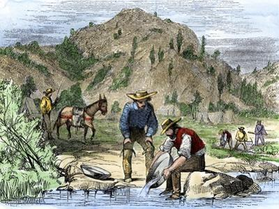 Gold Rush Prospectors Washing Sediments from a Stream to Find Nuggets in California