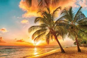 Golden Barbados Beach Sunset
