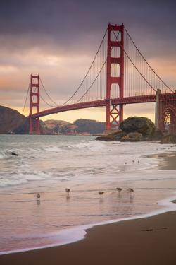 Golden Gate Bridge and Shore Birds, San Francisco
