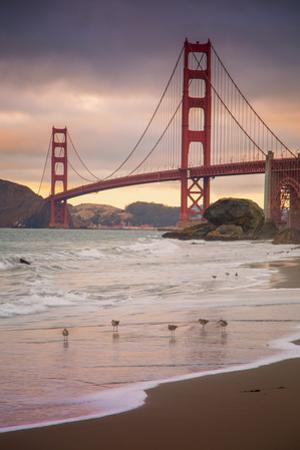 Golden Gate Bridge and Shore Birds, San Francisco