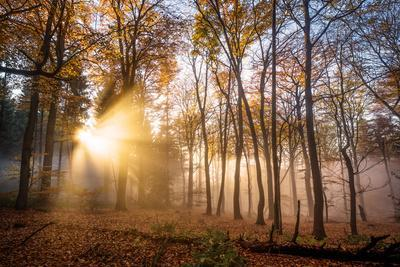 https://imgc.allpostersimages.com/img/posters/golden-rays-cutting-through-a-misty-forest-heidelberg-area-baden-wurttemberg-germany-europe_u-L-Q12SBV30.jpg?p=0