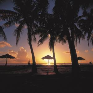 Golden Sunset with Silhouette of Palm Trees and Beach Umbrellas