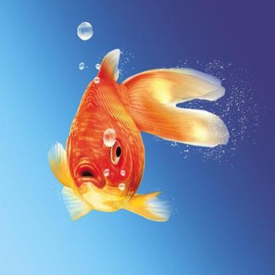 Goldfish with Water Bubbles