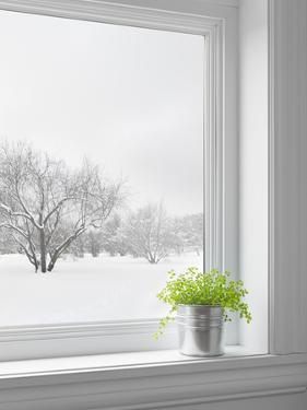 Green Plant and Winter Landscape Seen Through the Window by GoodMood Photo
