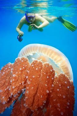 Snorkeling with Jellyfish by GoodOlga