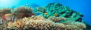 Underwater Panorama with Coral and Fishes. Andaman Sea. Merged from 5 Images by GoodOlga