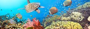 Underwater Panorama by GoodOlga