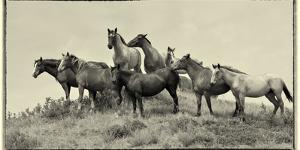 1421 Mustangs Of The Badlands B&W by Gordon Semmens