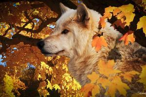 Autumn Leaves and Wolf by Gordon Semmens