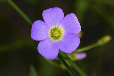Flower by Gordon Semmens