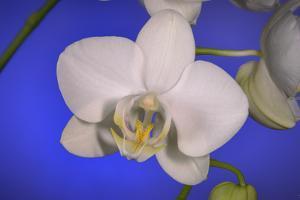 flowers, floral by Gordon Semmens