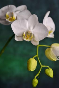 Flowers by Gordon Semmens