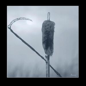 Ice Cattail 2 by Gordon Semmens