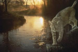 Misty Water Morn by Gordon Semmens