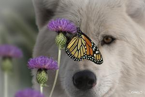 Monarch and Wolf by Gordon Semmens