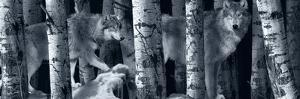 Silver Tone Moon Shadows 2 by Gordon Semmens