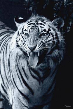 White Tiger 2 by Gordon Semmens