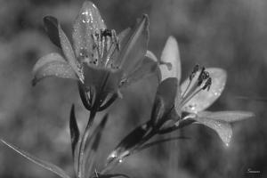 Wildflowers 3 by Gordon Semmens