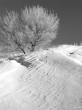 Winter Frost 2 by Gordon Semmens