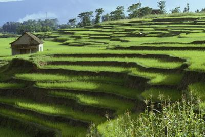 A modest house in terraced rice fields. by Gordon Wiltsie