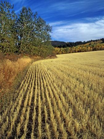 Fall Wheat Stubble in Fields Near Bozeman by Gordon Wiltsie