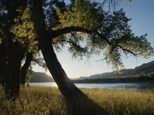Twilight View of Missouri River and Cottonwood Tree by Gordon Wiltsie