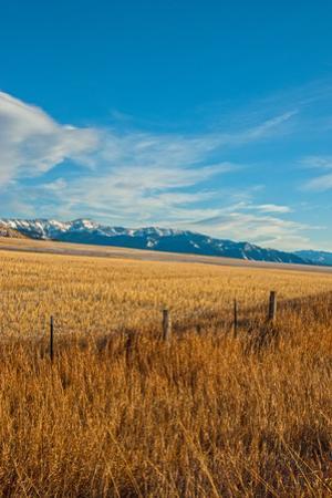 Wheat Fields Spread Below the Bridger Mountains in the Northern Gallatin Valley Near Bozeman by Gordon Wiltsie