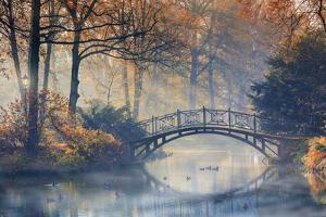 Autumn - Old Bridge in Autumn Misty Park by Gorilla