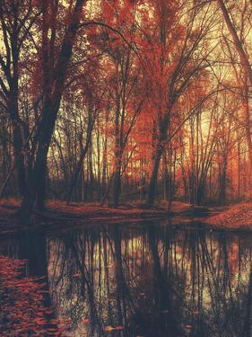 Autumn Trees Colorful Leafes Lake 2 by Grab My Art