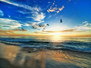 Seascape Sea Beach Birds Sundown by Grab My Art