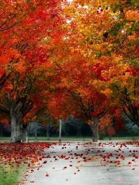 Season Autumn Fall Colorful Leafes Tree by Grab My Art