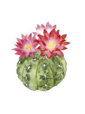 Cactus Bloom III by Grace Popp