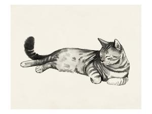 Cat Laze II by Grace Popp
