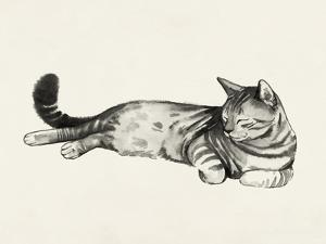 Cat Laze II by Grace Popp